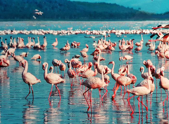 5 Days Lake Nakuru National Park and Maasai Mara Safari tour