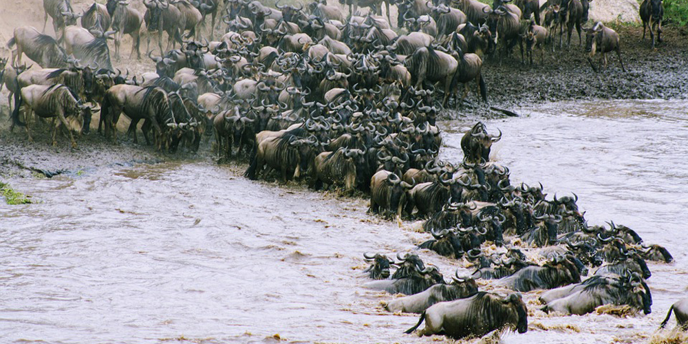 13 Days Gorillas, Chimpanzees & Great Migration Safari in Uganda & Tanzania