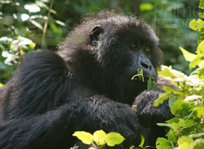 13 Days Uganda Gorillas & Great Migration Tanzania Safari