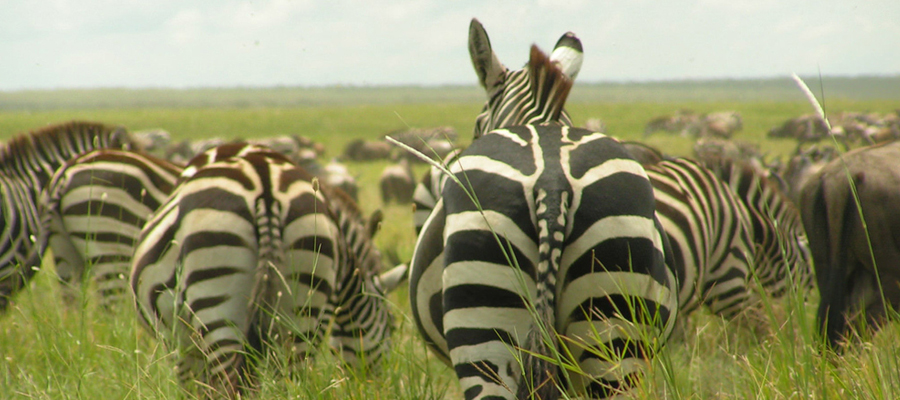 Combined East Africa Safaris