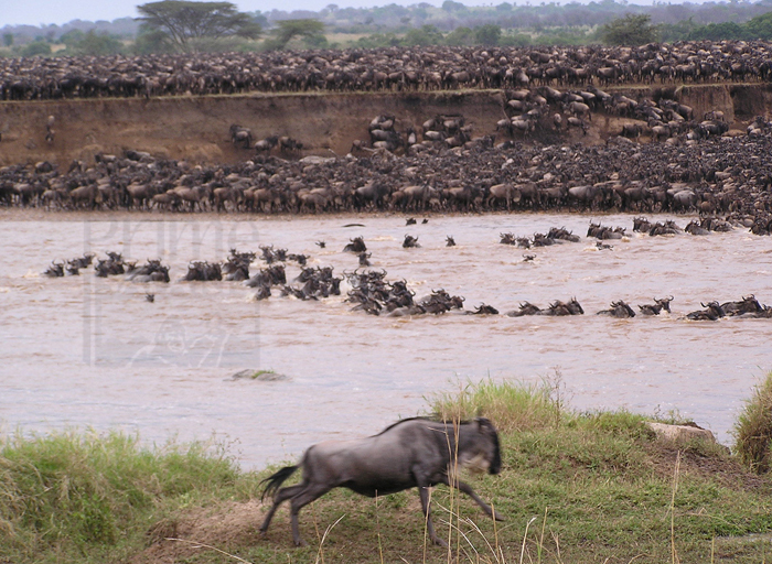 8 Days Tanzania Safari Mara River Great Migration
