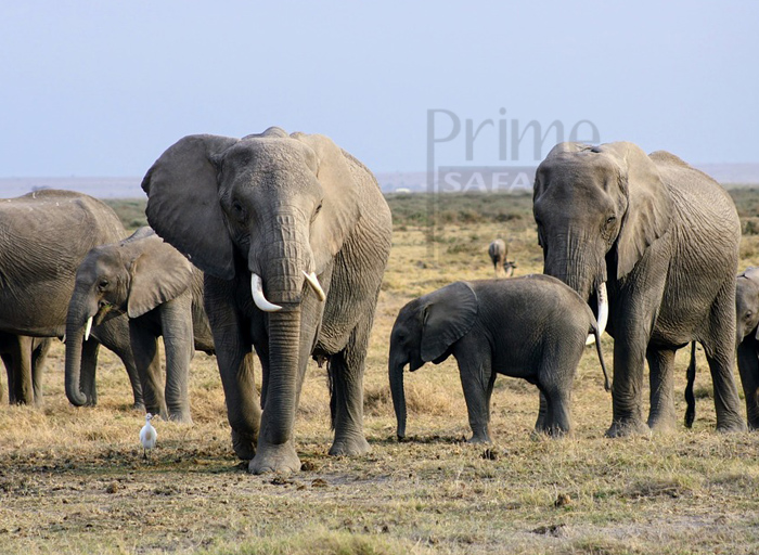 6 Days Samburu L. Nakuru National Park & Maasai Mara tour