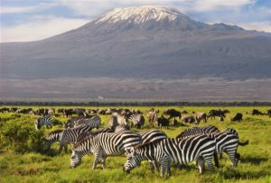 8 Days Safari in Tanzania Trip