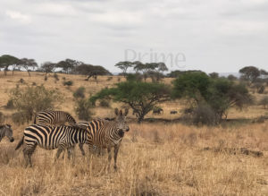 3 Days Tanzania Safari in Tarangire & Ngorongoro Crater