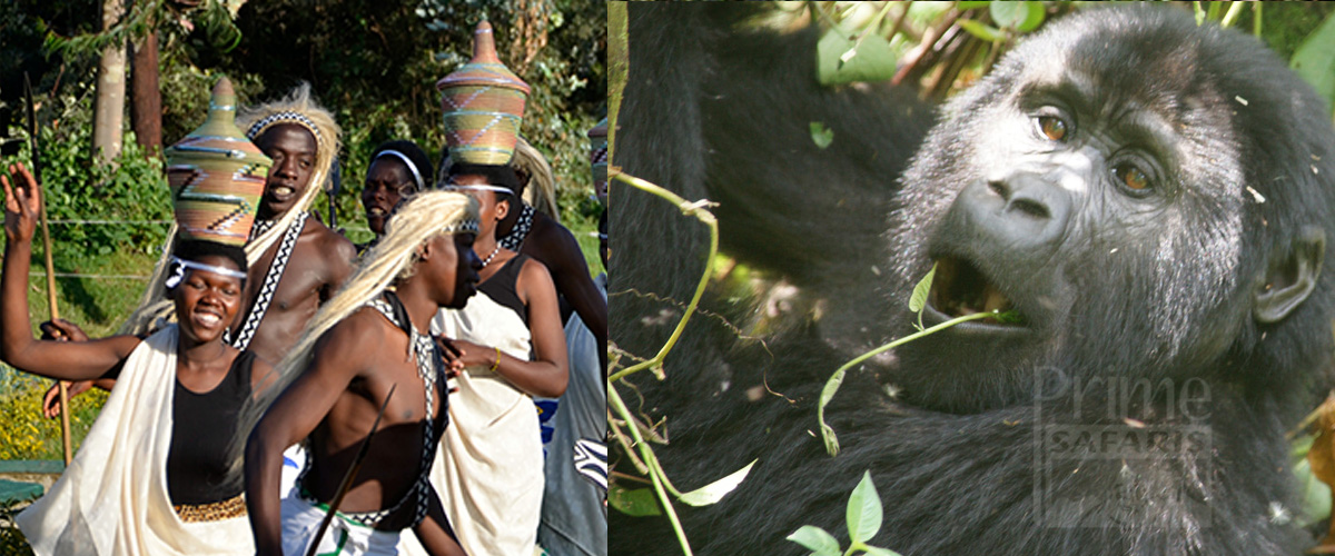 Rwanda Gorilla and Culture Safari Tours