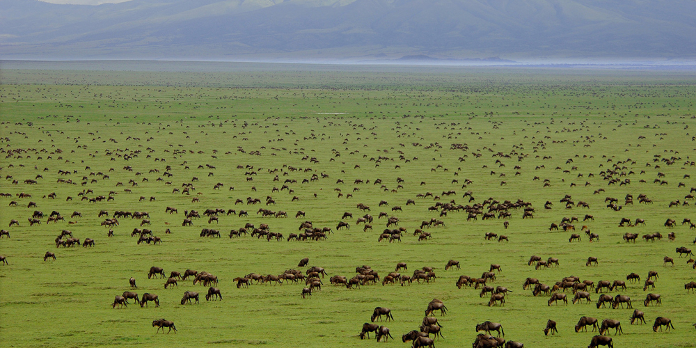 Tanzania Great Migration Safari