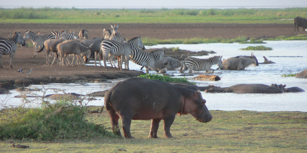 8 Days Tanzania Wild Safari-Northern Circuit