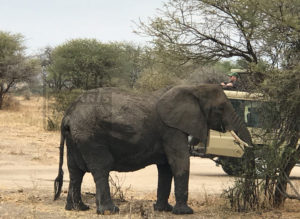 6 Days Big Five Tanzania wildlife Safari