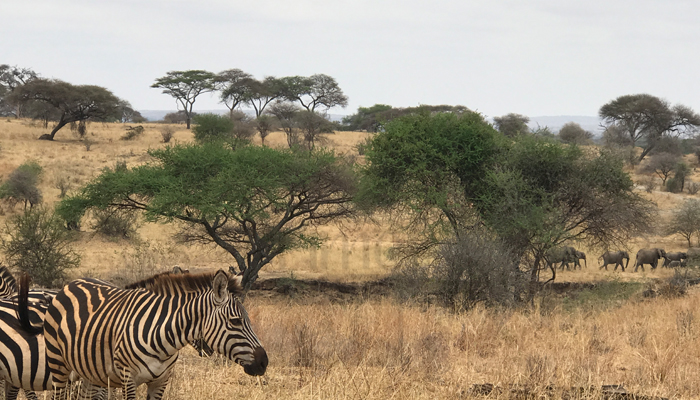1 Day Tanzania Safari in Arusha National Park