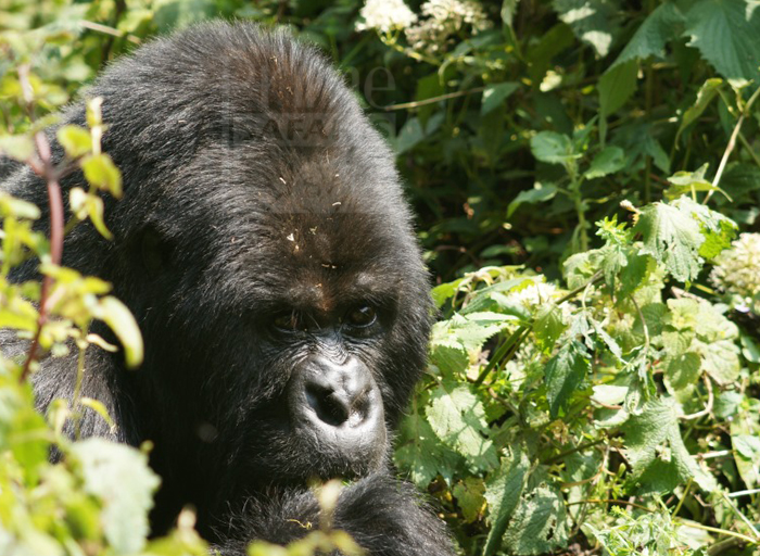 10 Days Rwanda Tanzania Great Migration and Gorilla Safari