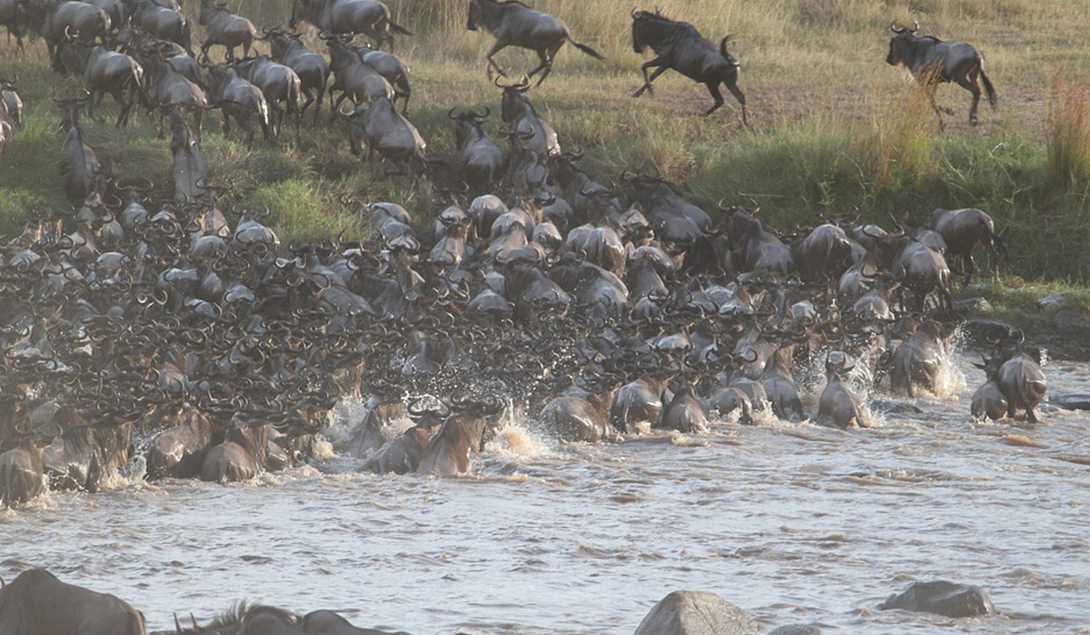 Great Migration in Tanzania Serengeti National Park