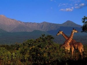 6 days Tanzania wildlife safari