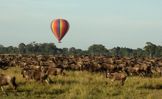 Kenya Safaris, Kenya Safari