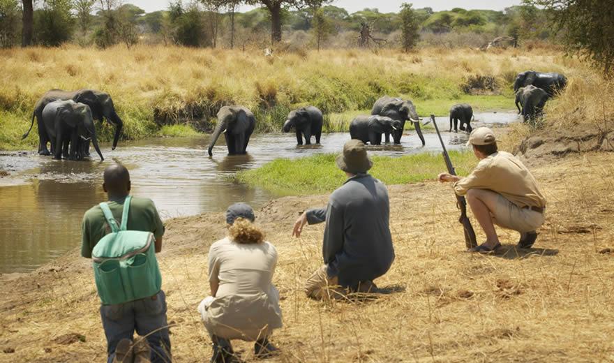Tanzania walking safaris -Tanzania Safari News